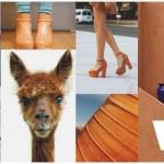 Como usar: Camel Color!